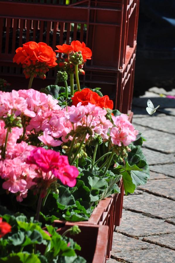 marche-aux-fleurs-0552